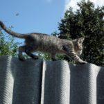Commet savoir si N°2 - Comment savoir si votre chat est un chat comblé ?