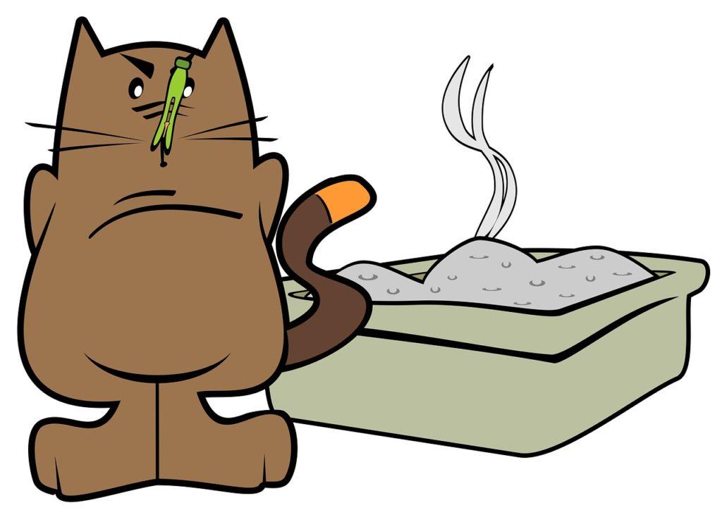 litière chat avis