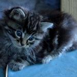 Éduquer mon chaton, les bonnes astuces