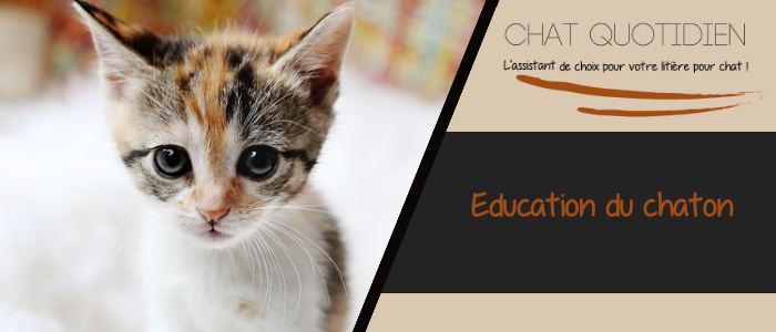 eduquer facilement un chaton