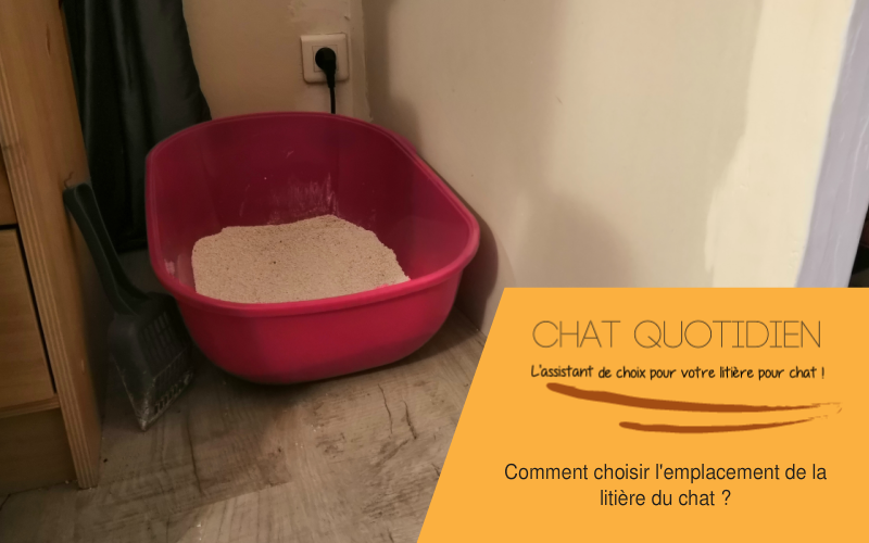 choisir emplacement litiere chat