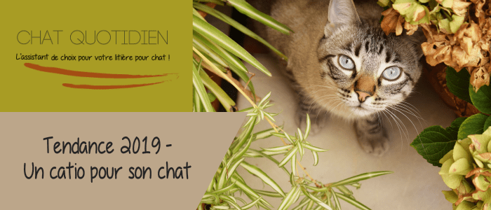 catio chat