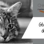 Comment gérer la perte de son chat ?