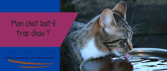 chat boit eau