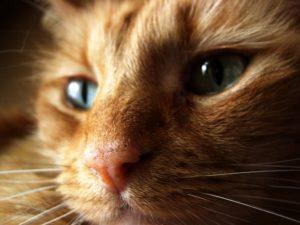 chat tristesse
