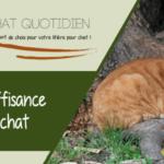 Comment soulager un chat atteint d'insuffisance rénale ?