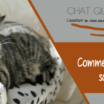 Comment faire obéir un chat ?
