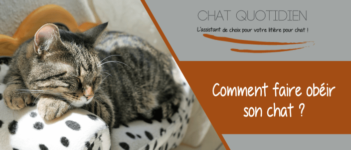 faire obeir chat