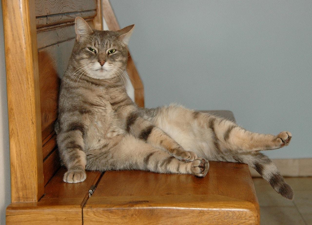 chat quotidien filou