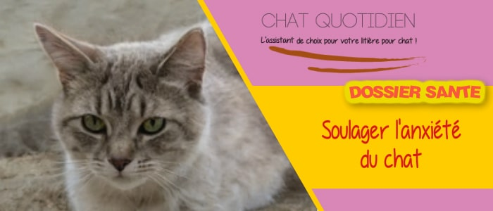 stress et anxiete chat