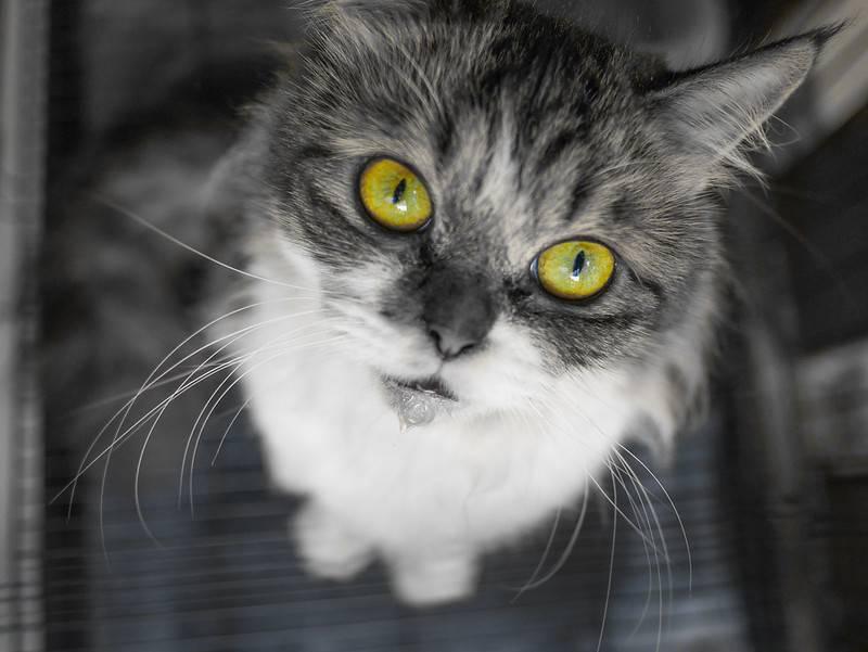 aider un chat a etre à l'aise