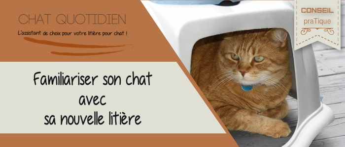habituer son chat à sa nouvelle litiere