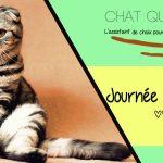 Journée mondiale du chat 2020 : Offrez lui le pack bien être