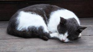 faut-il endormir son chat en voiture ?