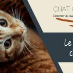 Mon chat vomi régulièrement : faut-il s'inquiéter ?