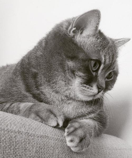 chat qui se sent mieux après période de stress