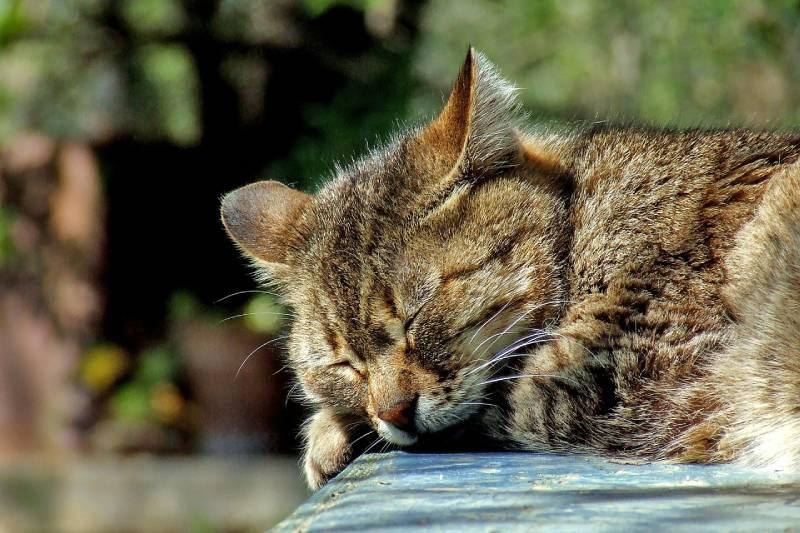 les habitudes du chat changement litiere