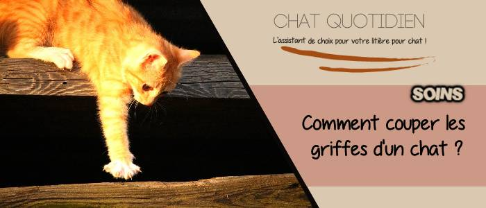 technique coupe griffe chat