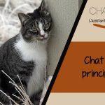 La gestion du chat qui a ses chaleurs : astuces et explications