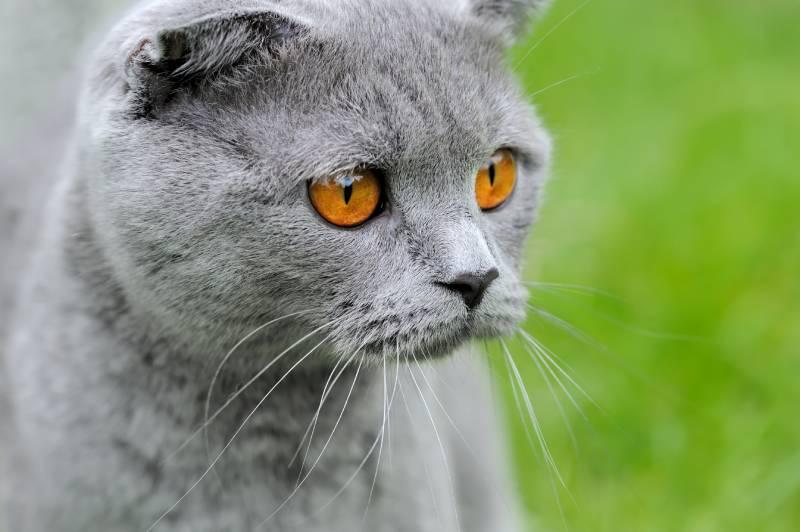le chat apprécie fortement terre diatomée biologique