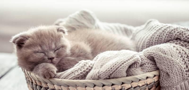 proposer un nouveau panier a mon chat