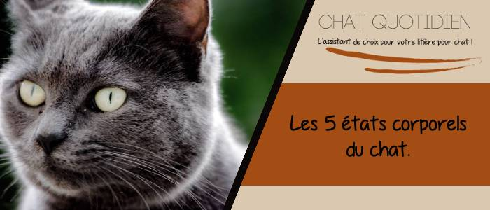les 5 morphologies du chat