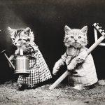 Accessoires pour la gestion de la litière du chat